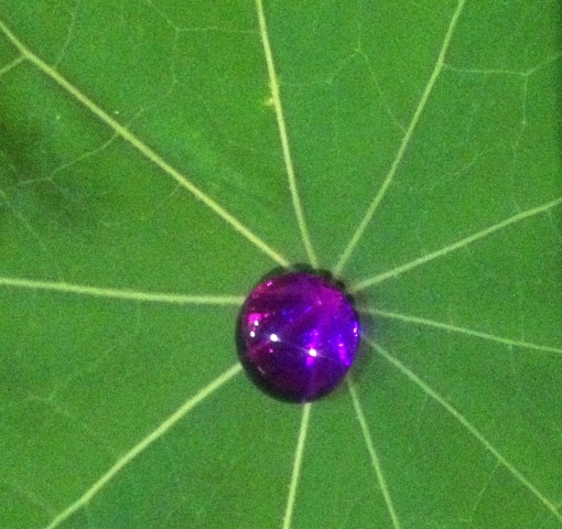 Hydrophobic leaf surface